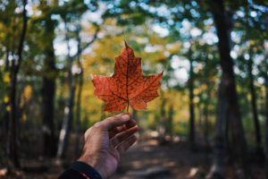 A hand holding out an orange maple leaf, in reference to new to Canada mortgages.