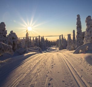 Sunlight on snowy road with trees highlighting light therapy for seasonal affective disorder