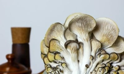 Closeup of oyster mushrooms for making wild mushroom soup