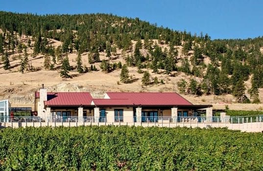 View of vines and Fitzpatrick winery