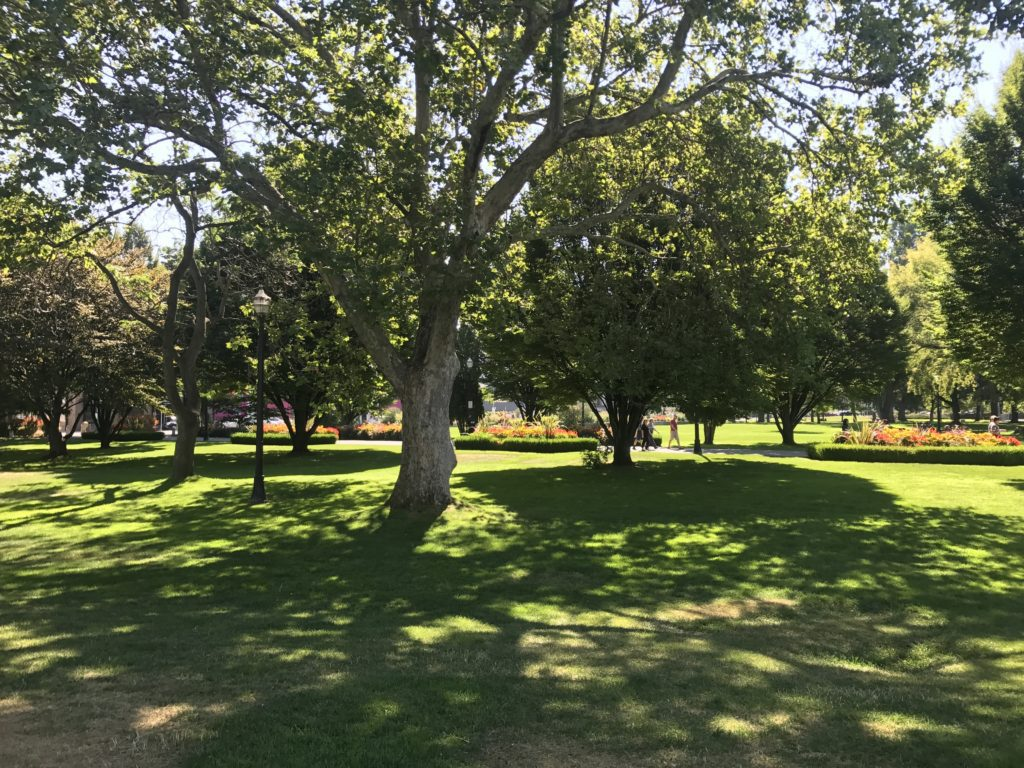 A Kelowna park called City Park that has plenty of tree shade and grassy fields for playing frisbee or soccer.